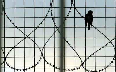 Αυτοκτονίες σε Καταστήματα Κράτησης & Αστυνομικά Κρατητήρια